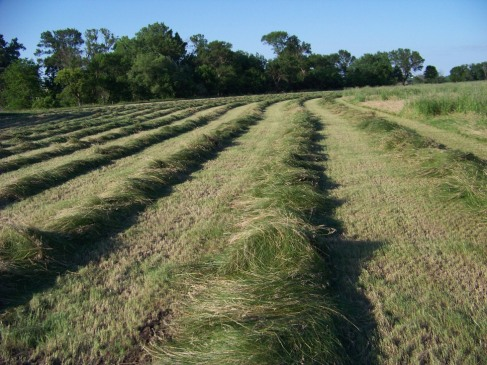 We make our own hay from Nebraska prarie grass.