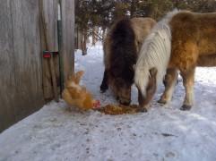 Jasper and Dusty, investigating the chicken scraps.