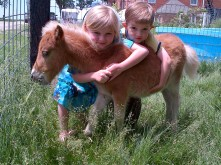 This was a bottle-raised foal. Not as easy as a lamb, but when you lose a mare, it CAN be done.