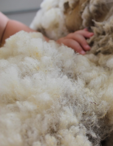 Yearling fleece is the finest and softest. White Babydoll wool is said to be in the 18-26 micron range; we'd like to have some of ours tested someday.
