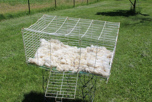 After washing, it dries fastest in the sun and wind. A drier would felt it.